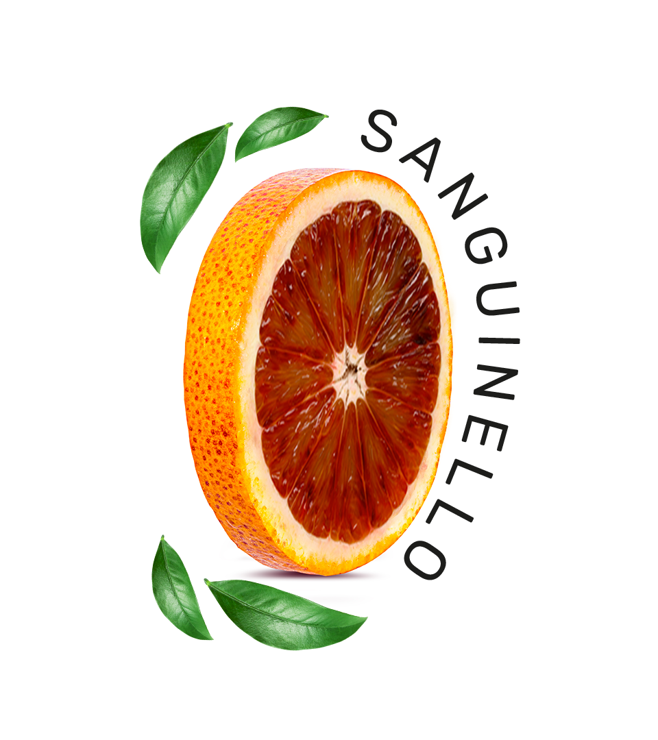Sanguinello_4