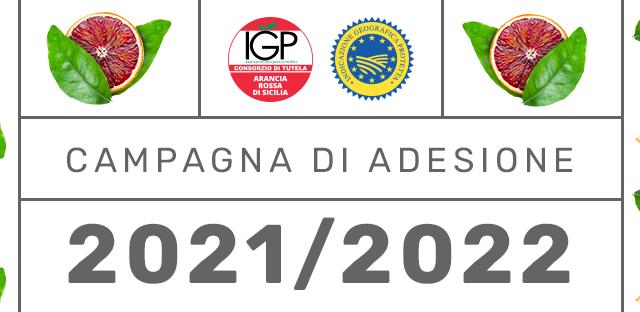 Agrumicoltura | Parte oggi la campagna di adesione 2021/2022 al Consorzio Arancia Rossa di Sicilia IGP.
